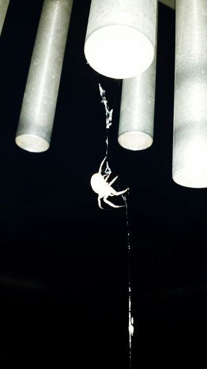 Wind Chimes Spider Nature_collection Eyenaturelover Check This Out Nature_collection Landscape_collection EyeEmNatureLover Nature Photography Hanging Out Oklahoma Showcase:July Nightlife Night Night Boots N Jeans Gal💝 Outdoor Pictures Fragility Spider Dusk In The Country