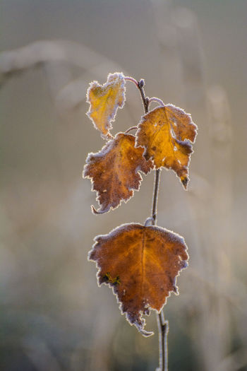 Close-up No People Frozen Winter Cold Temperature Seasons Macro Close Up Leaves Nature Autumn Tiny