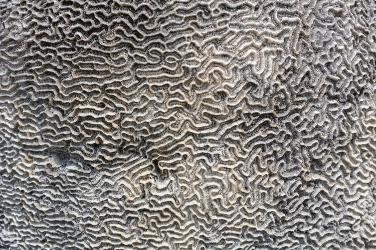 Stone Stone - Object Stone Material Brain Arts And Crafts Art Art, Drawing, Creativity Art Photography Closeup Patterned Artphotography Close-up Textured  Art And Craft ArtWork Nature Nature Photography Abstractphotography Background Wallpaper Abstract Photography Stone Wall Pattern Design Walls Buetiful...