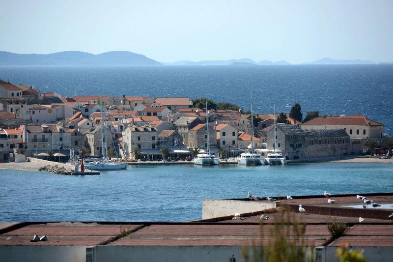 Primosten Primošten Harbor Island Croatia Marina AdriaBoat Going Sailing Harbour Moored Nautical Vessel Port Sailboat Sailing Water Waterfront Yacht
