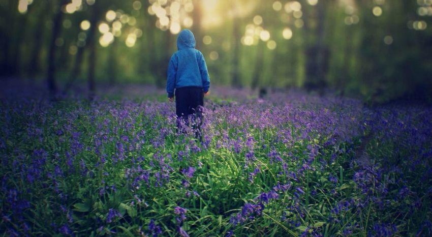 Bluebell Wood Bluebells A Walk In The Woods EyeEm Best Shots IPSLight