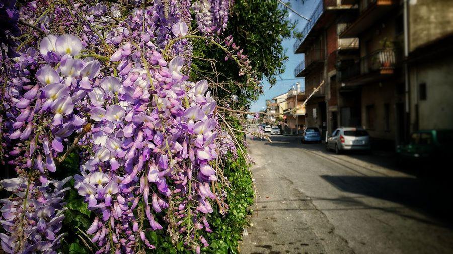 Purple flowers on road in city