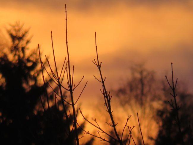 !amazing Germany Amazingday Sonnenschein  Sonnenuntergang Canon Feld Skyline Natureloversgallery Sunsets EyeEm Bestphoto Fotographieelocin Naturephotographer Amateurphotography Ichfangedenmomentein Hamburg Fotographie_elocin Canon_photos Amateur EyeEm Selects Sunset Nature Silhouette Plant Landscape Sunlight Vibrant Color Beauty Outdoors Multi Colored