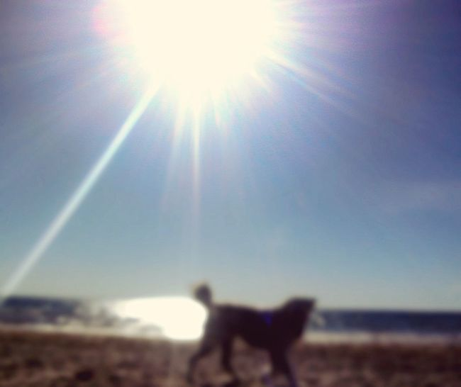 Sol Playa Perro Desenfocado