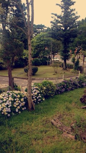 First Eyeem Photo Rio Grande Do Sul  Gramado Hotel 2014 Happy New Year