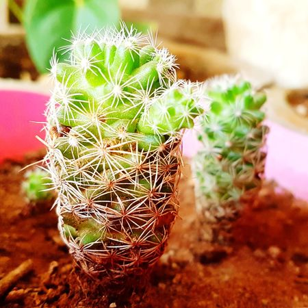 I would hug you, even if you poke... Cactus Flower Plant Nature Growth Close-up No People Beauty In Nature Day Outdoors Cactus