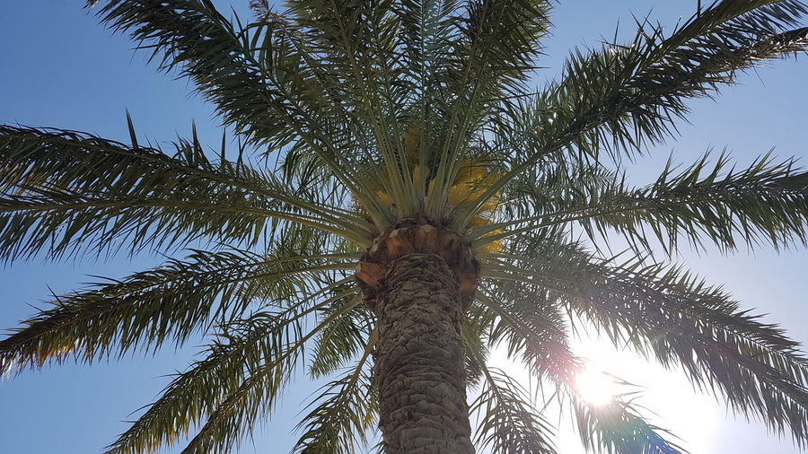 palm in sunny