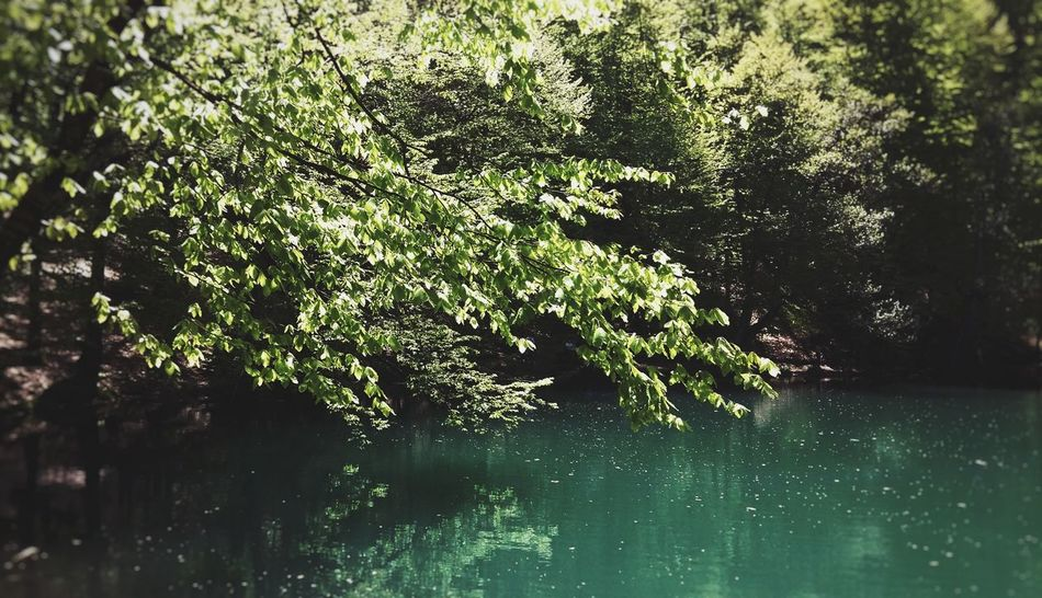 silence. Reflection Nature Water Summer Growth No People Outdoors Tree Day Beauty In Nature Green Nature Green Green Green!  Yedigoller Bolu TURKEY Yedigöller Milli Parkı Art Is Everywhere Beauty In Nature Green Color Lake Nature Tree Reflection Lake Reflection_collection Place Of Heart The Great Outdoors - 2018 EyeEm Awards