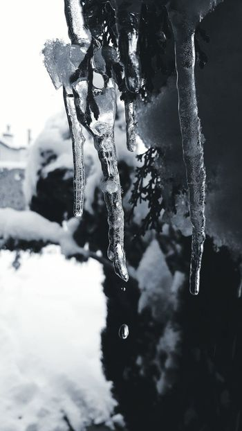 Iceicles in Texas Iceicles Big Ol Iceicles! Iceicebaby Snow Snow ❄ Snowing Snow Day Snowy Snowfall First Snowfall Winter Winter Wonderland Wintertime Winter 2015 Cold Cold Days Icecold Ice Cold Day Its Cold Outside Iceice  Winteriscoming My Winter Favorites