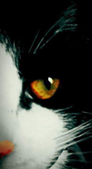Kittyeye Few Days Ago Sharing My Photos 😊✌💖