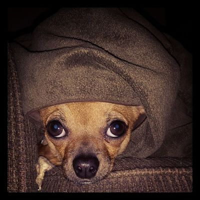 Dailyzigga blanket stealer ScaredyCat