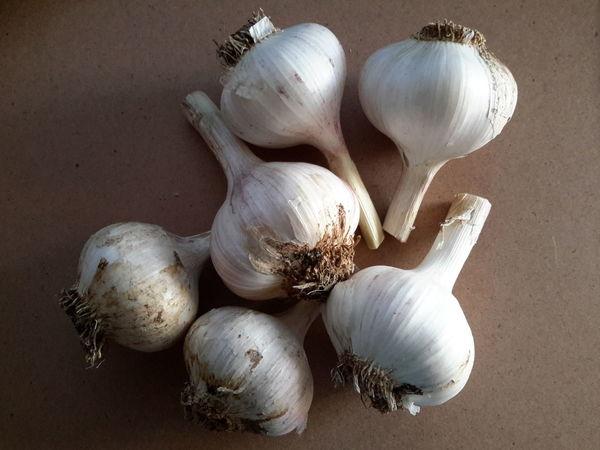 Homegrown garlic Close Up Homegrown Vegetable Garlic Garlic Bulb Ingredient Close-up