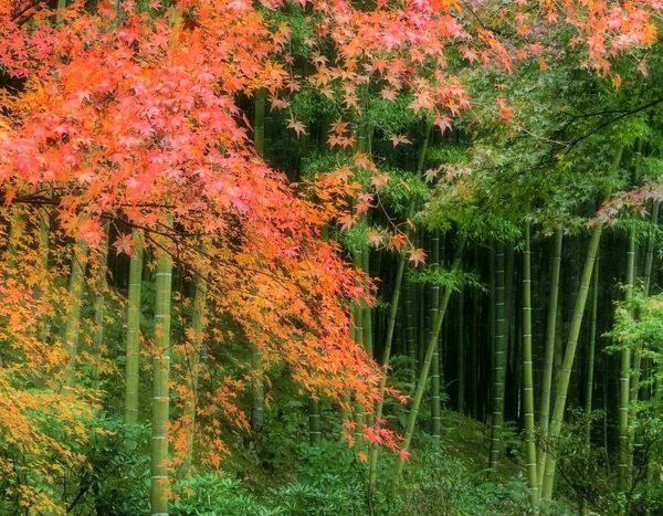 Autumn Leaves Nature Rainy Day Autumn 2014 紅葉 Kyoto 静寂 竹林 Bamboo Forest
