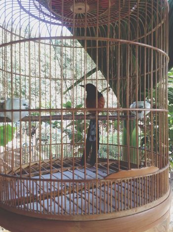 My birds ???? Mybird Bubaby Relaxing Beauty