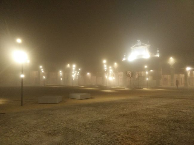 pavaglione Foresta Led EyeEm Selects Fog Forest Night Illuminated Street Light No People Outdoors City The Graphic City