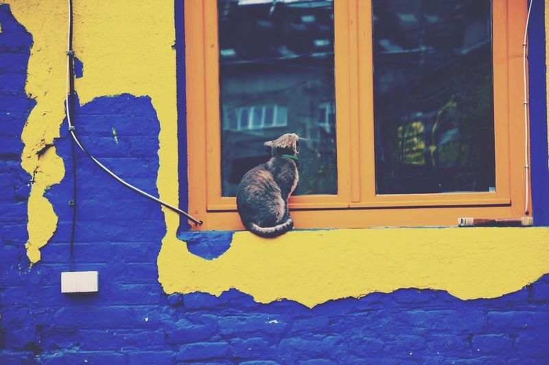 One Animal Animal Themes Pets Domestic Animals Mammal No People Bird Built Structure Architecture Animals In The Wild Day Outdoors The Secret Spaces Bohemian Focus On Foreground Colours Colorful Cat Window Blue Orange Color Belgrade Walking Around Animals Cats Of EyeEm The Street Photographer - 2017 EyeEm Awards