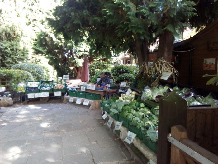 osterley park farm shop