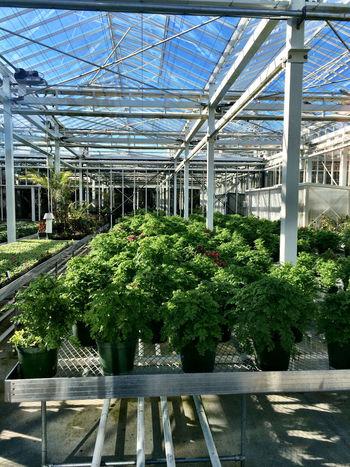 Preparing plants in the glasshouse Gardening Plants Botanical Gardens