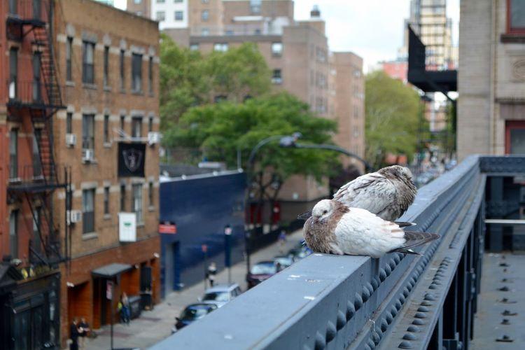 Birds in a city