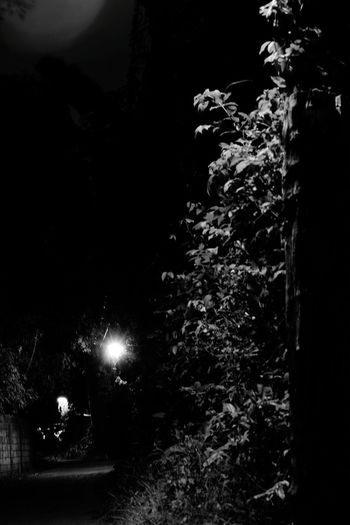 Day 4 of 365 📷🌲🌱 Bnw EyeEm Nature Lover EyeEm EyeEm Best Shots Eyemphotography Night No People Tranquility Forest Nature Outdoors Tree