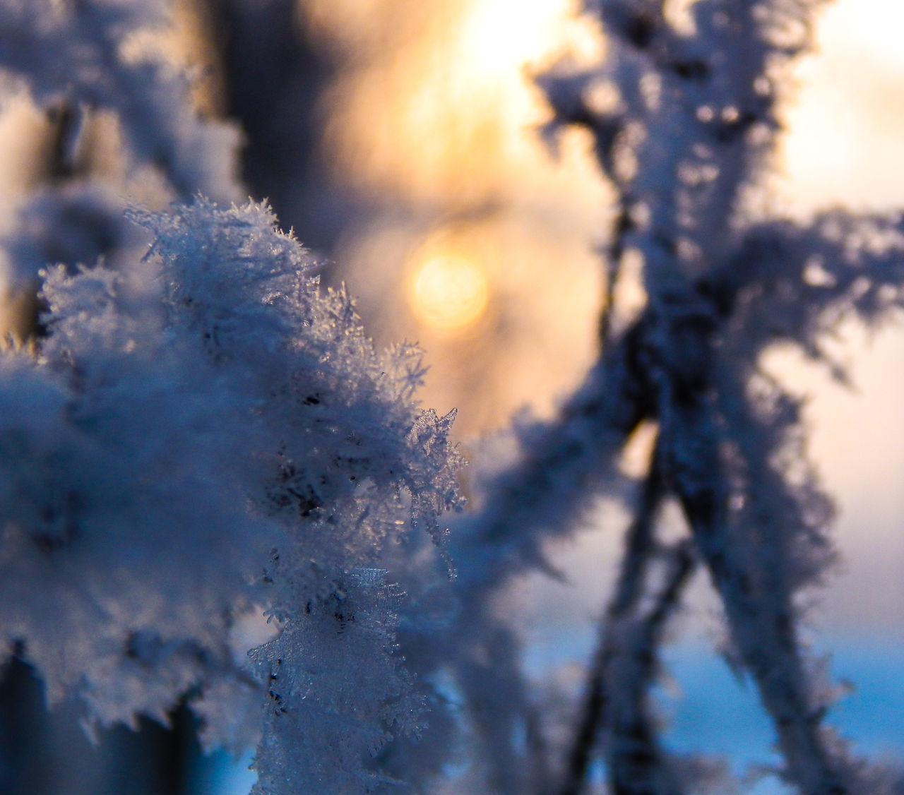 winter, nature, fragility, cold temperature, tree, beauty in nature, close-up, snow, frozen, weather, growth, no people, day, outdoors, branch, freshness, focus on foreground, flower, tranquility, sky