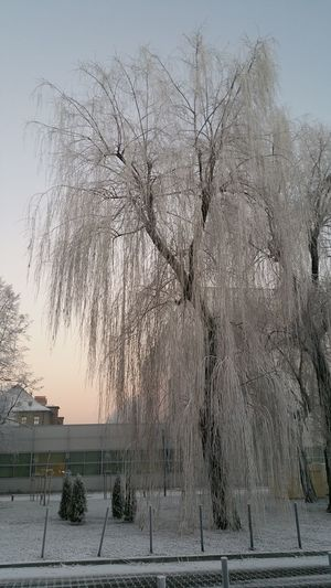 Winter Tree Nature Cold Temperature Beauty In Nature Wintertree Snowy Tree Snow Day Snow