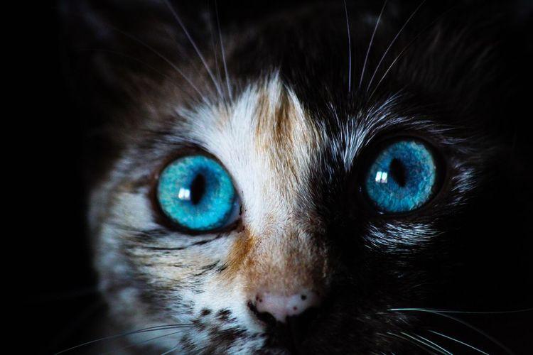 Blue eyes, red
