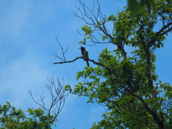 Bird Tree Tree