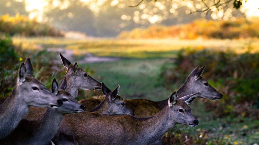 Animal Themes Animals In The Wild Antler Beauty In Nature Day Grass Mammal Nature No People Outdoors Stag
