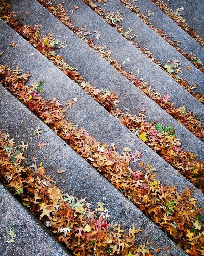 High angle view of leaves falling on footpath