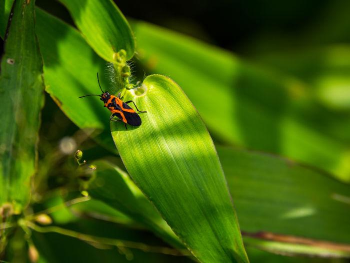 Close-up of ladybug on plant