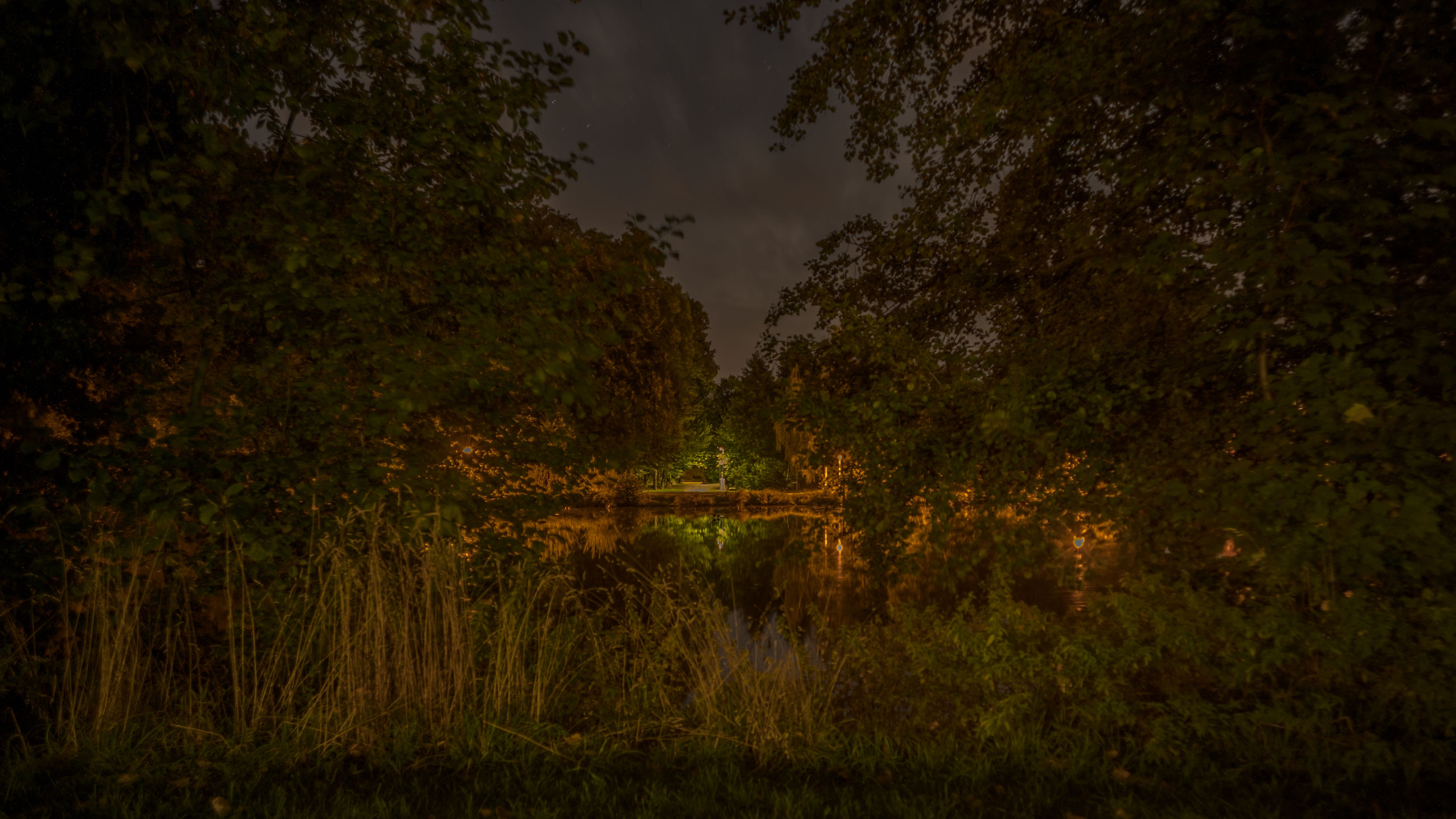 plant, nature, tree, darkness, forest, leaf, morning, sunlight, natural environment, land, beauty in nature, light, no people, tranquility, grass, environment, sky, scenics - nature, autumn, growth, green, outdoors, reflection, landscape, tranquil scene, field, non-urban scene, woodland