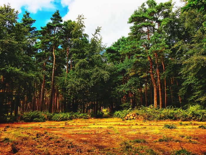 Tree Plant Growth Nature Beauty In Nature Tranquility No People Forest