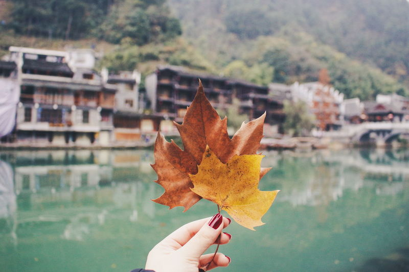Yellow Leaves Autumn Close-up Finger Focus On Foreground Hand Holding Human Body Part Human Finger Human Hand Leaf Leaves Lifestyles Maple Leaf Nature Personal Perspective Unrecognizable Person The Still Life Photographer - 2018 EyeEm Awards