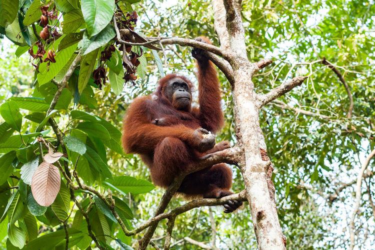 Monkey on tree in forest