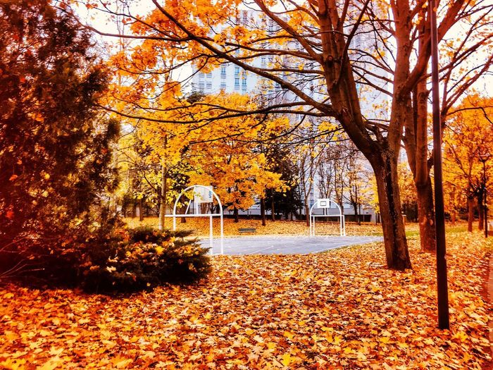 Wanna play ? Autumn Change Leaf Tree Nature Beauty In Nature Orange Color Scenics Tranquility Outdoors No People Tranquil Scene Maple Tree Day Maple Leaf Branch Red Forest Best EyeEm Shot Eye4photography  EyeEmNewHere Eyeemphotography EyeEm Best Shots EyeEmBestPics Sky