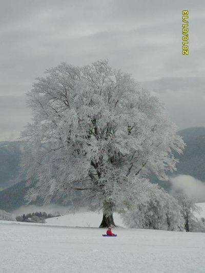 Edge Of The World Selva Negra Snow ❄ Nieve Frio Nieve Invierno Winter Nature