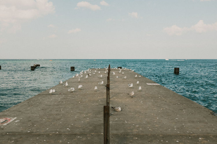 Beach Beauty In Nature Birds Chicago Day Horizon Over Water Nature No People Outdoors Scenics Sea Seagulls Sky Water