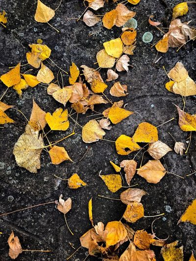 Fall Colors Iphone7 IPhone IPhoneography Yellow Leaf Leaf 🍂 Fall Colors Fall Beauty Fall Full Frame Backgrounds Pattern Yellow No People High Angle View Close-up Nature Outdoors Directly Above Creativity Natural Pattern Beauty In Nature Black Color Day