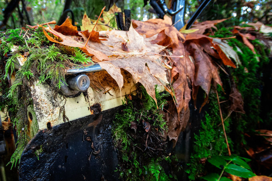 Plant Part Leaf Day Nature No People Plant Tree Land Dry Outdoors Close-up Forest Autumn Tree Trunk Trunk Selective Focus Focus On Foreground Field Metal Moss Leaves Bark Car Door Handle