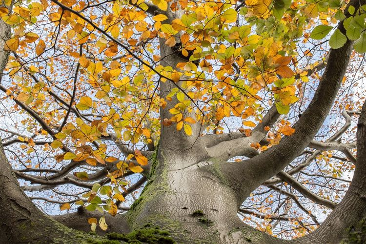 Autumn coming in for a hug Autumn Leaf Tree Nature Beauty In Nature Branch Change Outdoors Tree Trunk Yellow Low Angle View Landscape Multi Colored Scenics No People Tranquility Autumn Fall Autumn Leaves Day Growth Travel Destinations Rural Scene Lost In The Landscape
