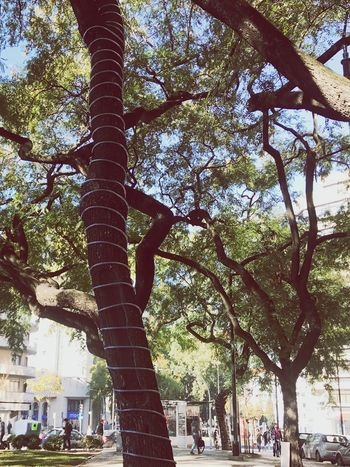 Tree Incidental People Day Architecture Built Structure Tree Trunk Travel Destinations Outdoors Low Angle View Nature Branch Building Exterior People City Sky