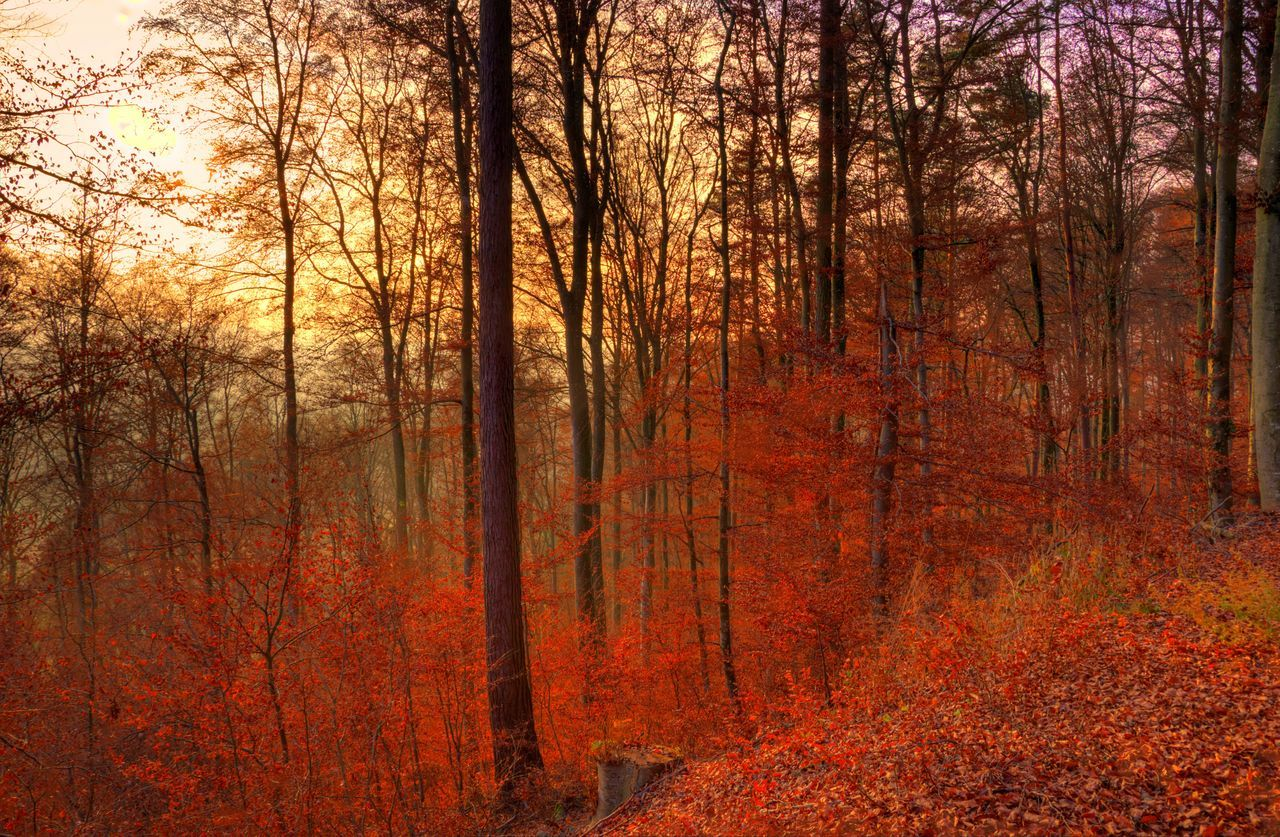 Day Forest Forest Fire Growth Landscape Nature No People Orange Color Outdoors Red Sunset Tree