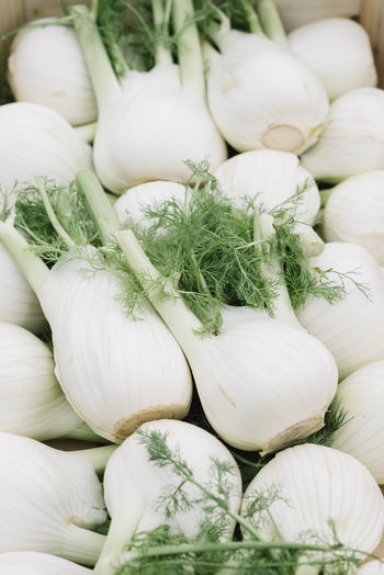Fresh fennel at a farmers market Agriculture Farmers Market Herb Natural Plant Vegetarian Food Bulbs Clean Eating Delicious Fennel Flavour Food Gourmet Harvest Healthy Ingredient Nutrition Organic Seasoning Spice Spices Summer Sweet Vegetable Vitamin