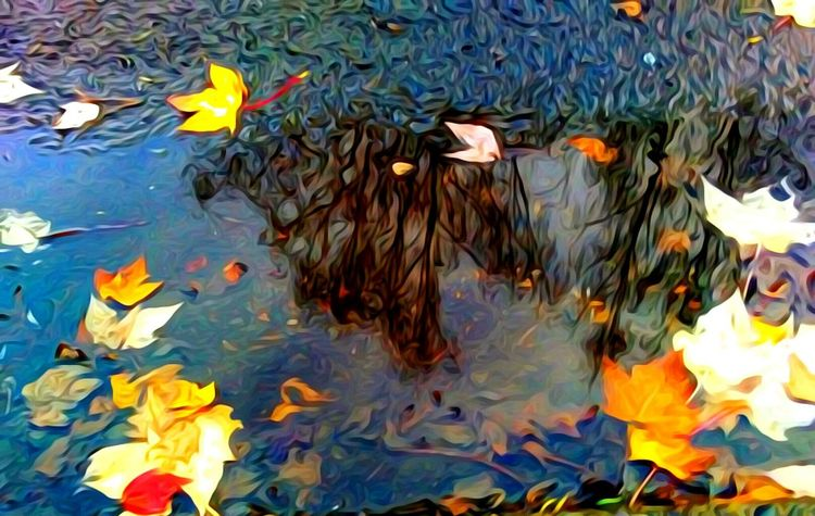Water Leaf High Angle View Nature Outdoors Floating On Water Reflections In The Water Puddle Reflections Rainy Days☔ A Dash Of Magic Wicked Awesome Vote For HillaryClinton The Week On EyeEem Autumn Maximum Closeness Telling Stories Differtenly Light And Reflection Color Photography Multi Colored Halloween EyeEm Outdoors Photograpghy  Fall Collection Essence Of Fall Freshness EyeEm Master Class