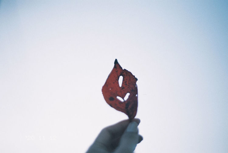 Close-up of hand holding maple leaf against clear sky