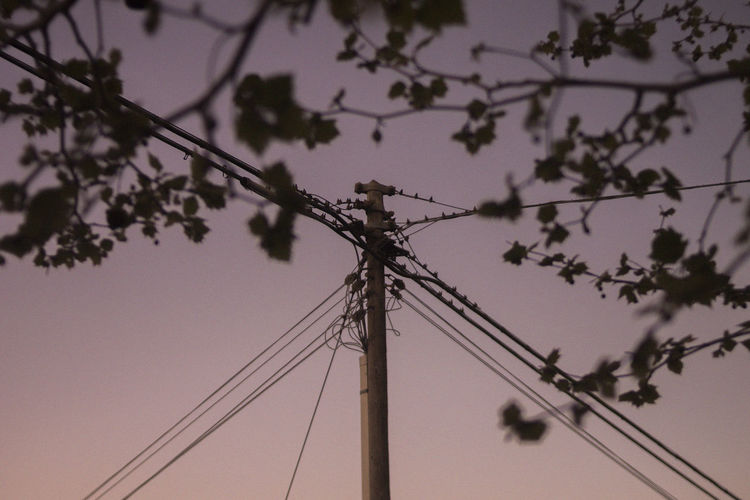 Cable Electricity  Low Angle View Power Line  Sky Technology Connection Tree Fuel And Power Generation Power Supply No People Electricity Pylon Silhouette Plant Nature Dusk Outdoors Telephone Pole Communication Telephone Line Electrical Equipment