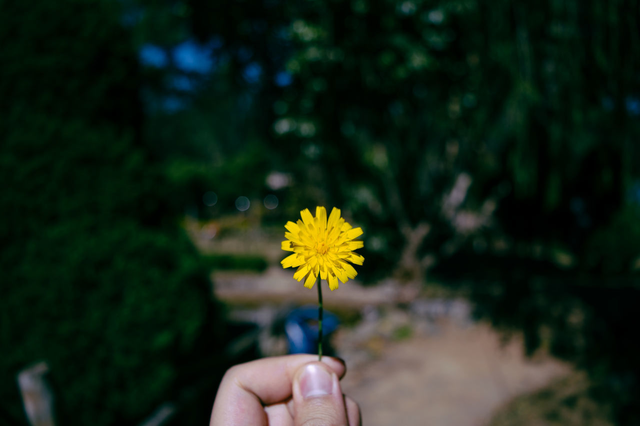 Cropped Hand Holding Yellow Flower On Sunny Day