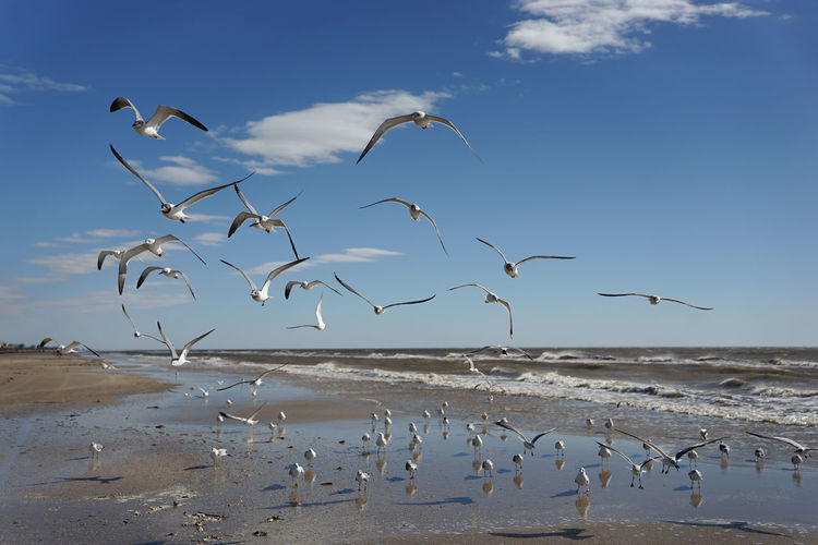 Birds flying against sea at beach