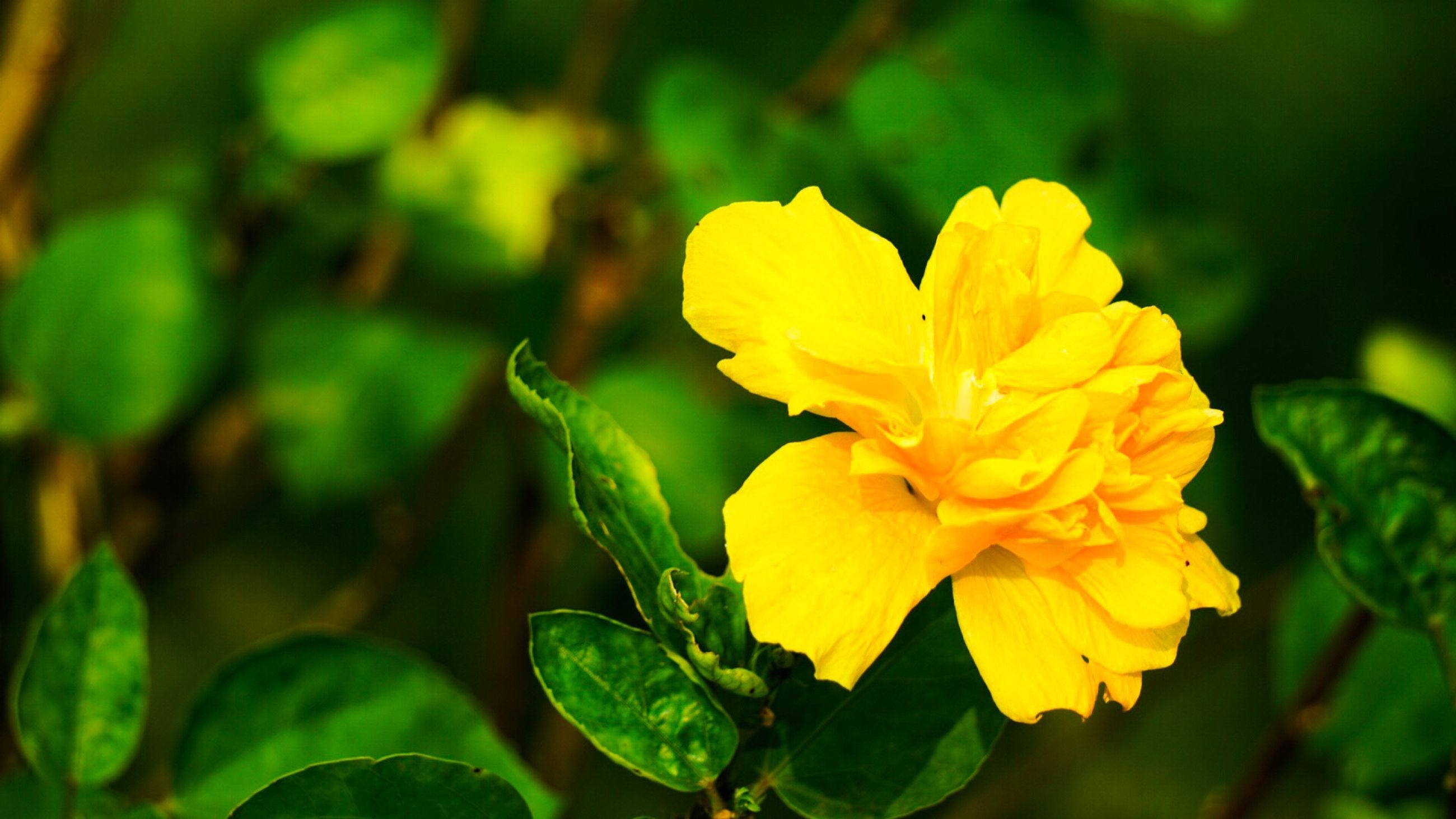 flower, freshness, petal, yellow, fragility, flower head, close-up, vibrant color, stem, springtime, growth, blossom, beauty in nature, in bloom, single flower, focus on foreground, softness, nature, stamen, selective focus, plant, botany, outdoors, day, yellow color, bloom, green color, no people, sepal
